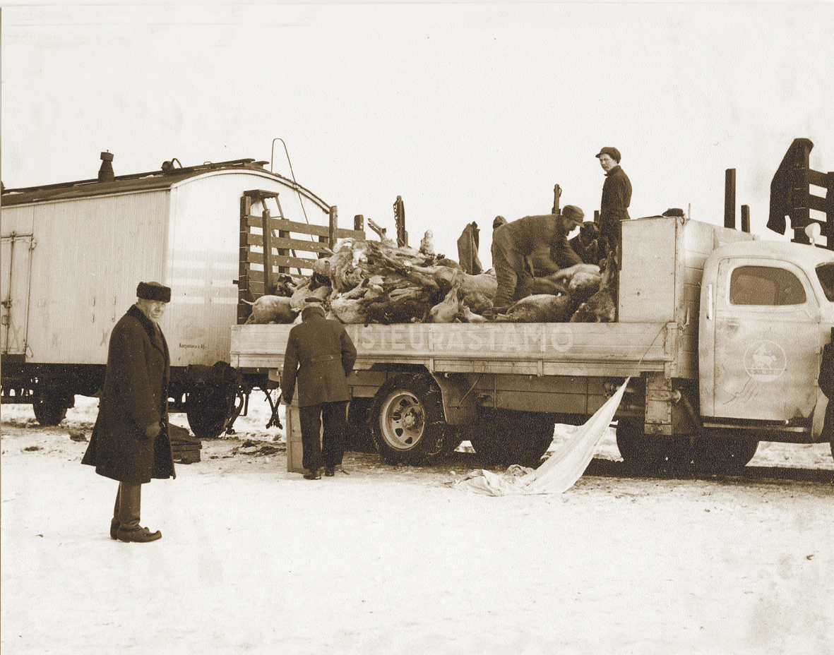 The entire nation was affected by the war. Meat was still available during the Winter War. Refugees from Karelia were forced to slaughter their livestock, which resulted in a temporary increase in the supply of meat. Animals had to be slaughtered in field conditions right on the new border. The carcasses were then transported onwards to organisations such as Lihakunta and Itikka for the next stages.