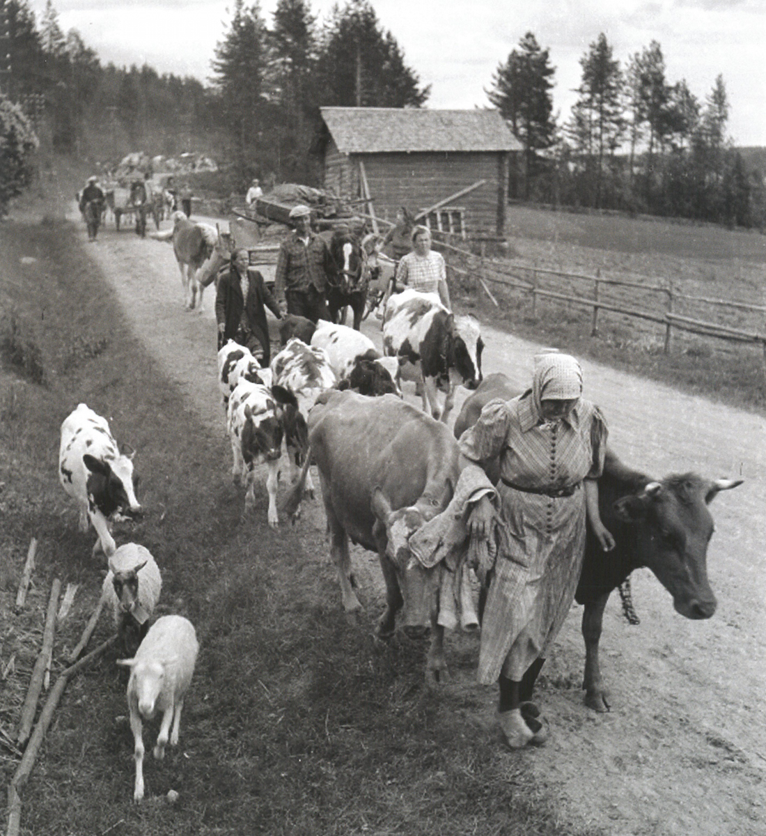 The entire nation was affected by the war. Meat was still available during the Winter War. Refugees from Karelia were forced to slaughter their livestock, which resulted in a temporary increase in the supply of meat.