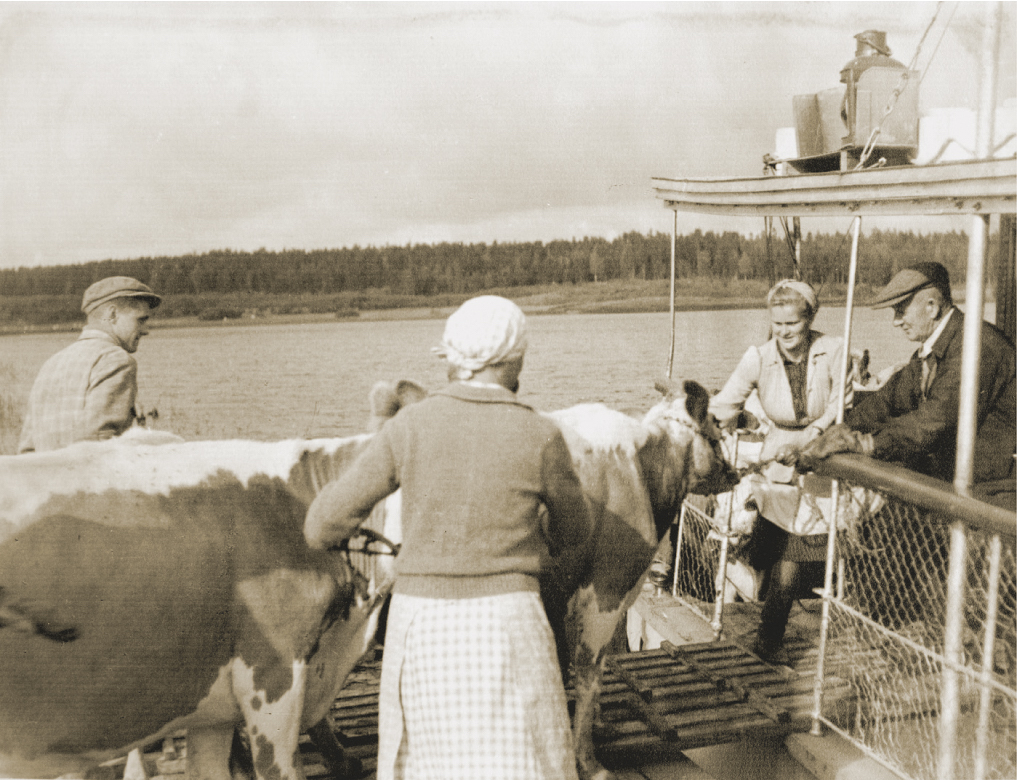 The waterways were also used. This was possible in the area where Lihakunta operated. Lihakunta even had its own ship, which was called Osuusteurastamo (co-operative slaughterhouse). The ship was still in use in the 1950s, after the Second World War, when it also transported livestock.