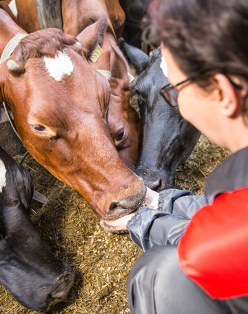Animal disease prevention safeguards public health