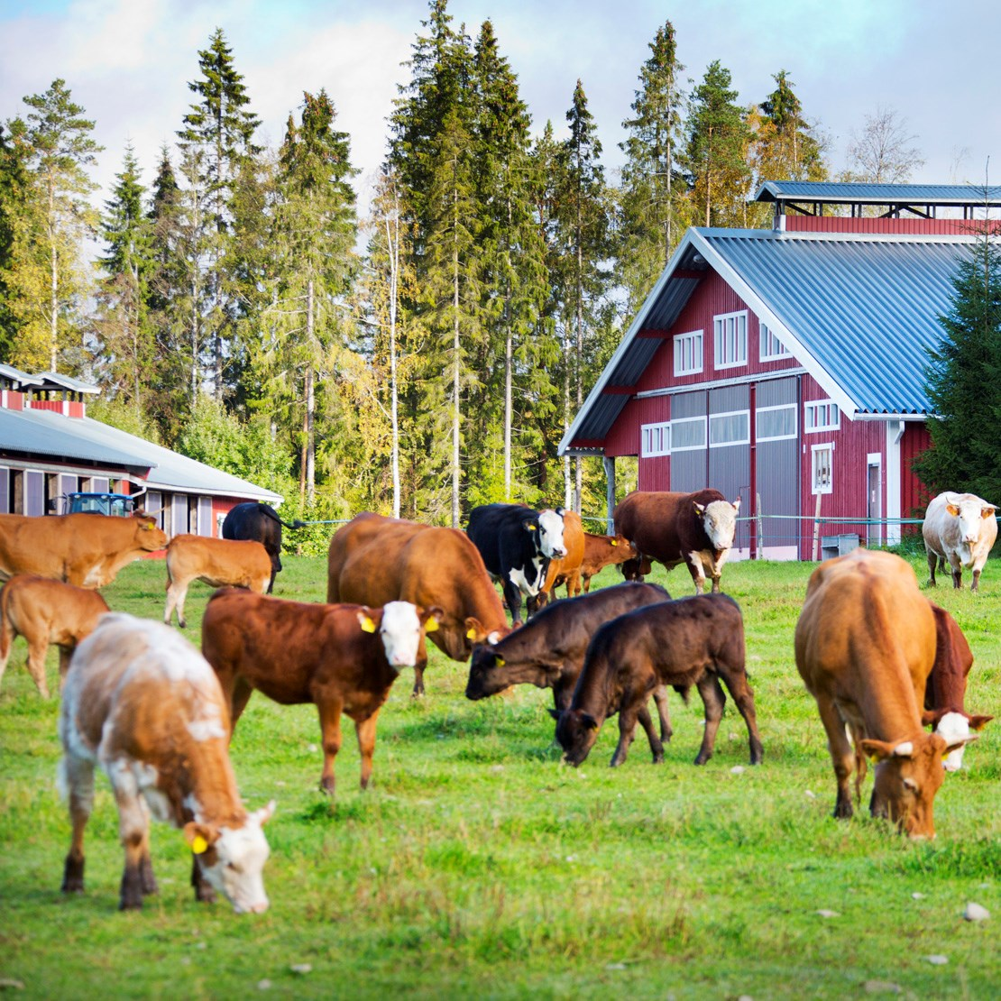Nordic meat is environmentally friendly
