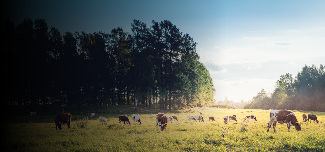 Nordic grass-based beef production and climate change in the focus